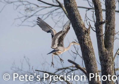 Pete's Precision Photo